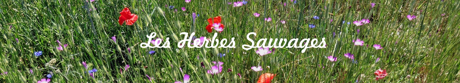 logo les-herbes-sauvages
